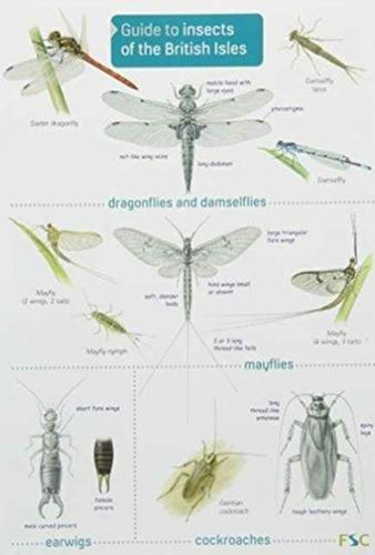 9781908819055 Guide to Insects of the British Isles